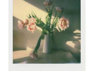 Polaroid i-Type Film u Boji